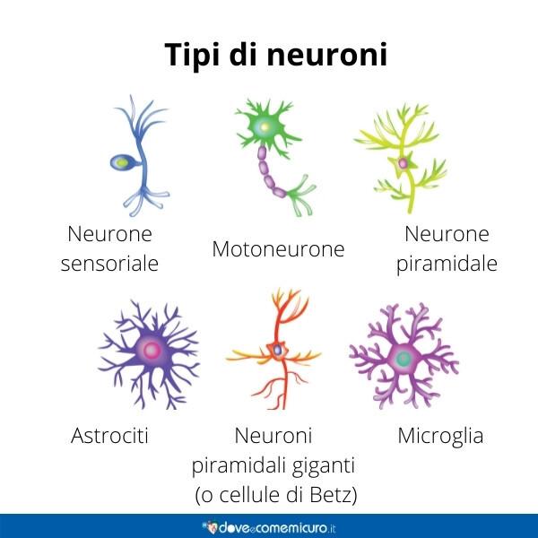Immagine infografica che rappresenta vari tipi di neuroni