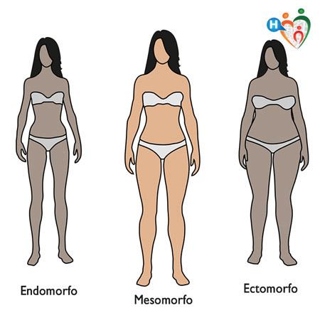 Caratteristiche Fisiche: Endomorfo, Mesomorfo, Ectomorfo