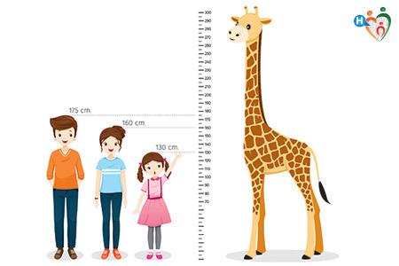 Altezza dei bambini in confronto ad una giraffa