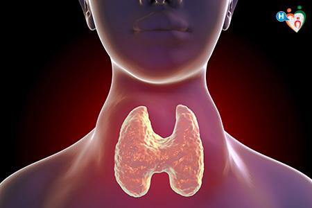 Immagine che mostra la tiroide