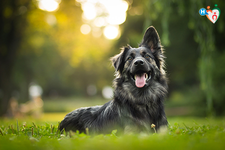 immagine di un cane sdraiato nell'erba