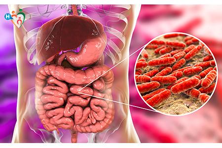 immagine che mostra i lattobacilli all'interno dello stomaco