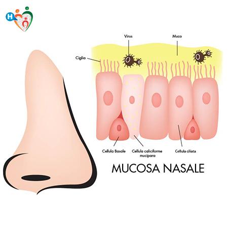 Immagine mostra come è formata la mucosa nasale