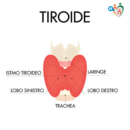 dieta per una persona con problemi alla tiroides