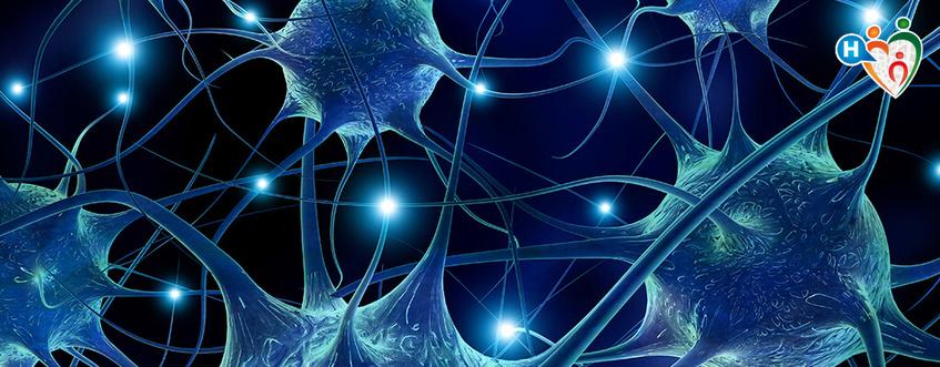 Cervello, memoria senza fine
