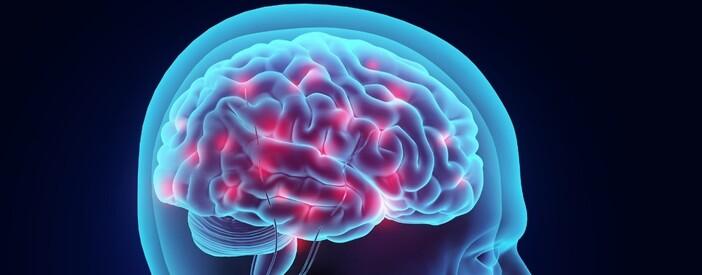 Cervello: come è fatto? Struttura, anatomia e funzioni