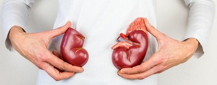 I reni: funzioni, patologie e cura