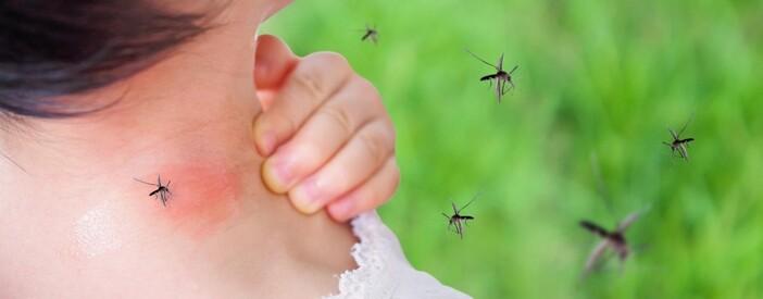 Puntura di zanzara: rimedi più efficaci e prevenzione