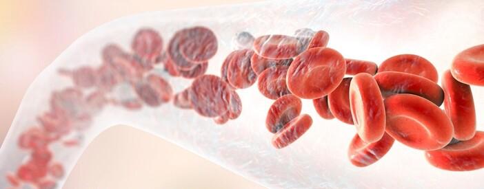 Sangue: funzioni, componenti e gruppi