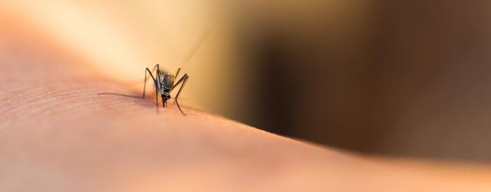 Zika Virus: sintomi, gravidanza, prevenzione e cura