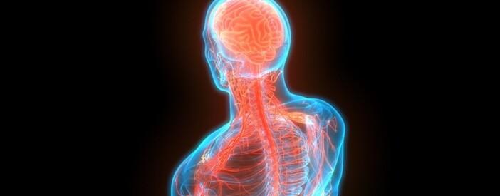 Cervello umano e sistema nervoso centrale e periferico