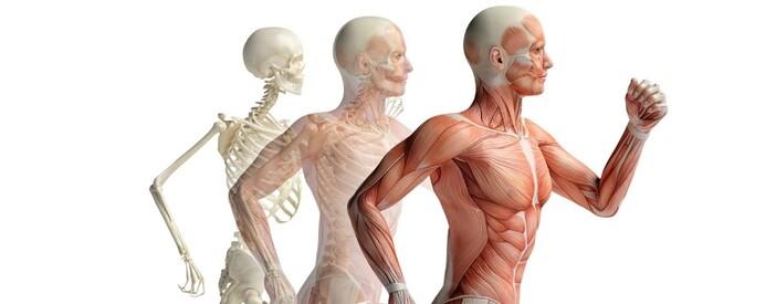 Apparato muscolo-scheletrico: ossa, muscoli e cartilagini