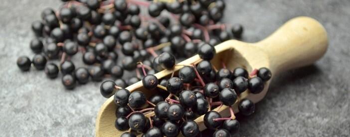 Sambuco (Sambucus nigra L.): proprietà e benefici