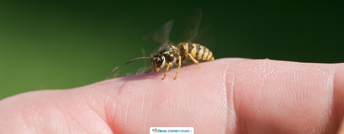 Punture di api, vespe e calabroni: cosa fare e non fare?