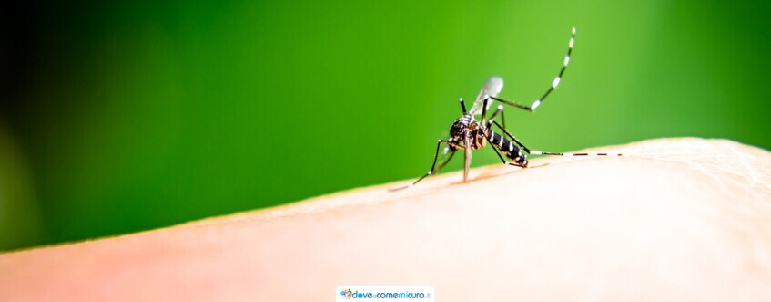 Punture di zanzare: cosa fare e non fare