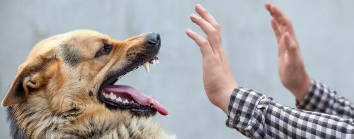 Morso di cane: cosa fare e non fare