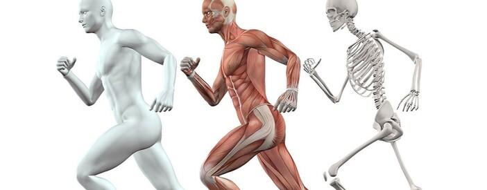 Femore, anca, ginocchio e spalla: dove operarsi?